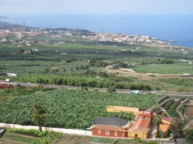 view of the banana plantations and Los cristianos and puerto de la cruz resorts