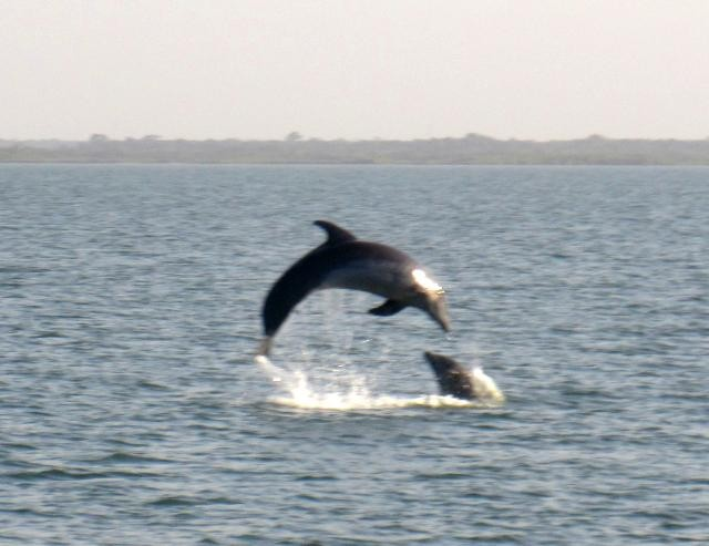dolphins-640